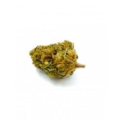 Fleurs CBD Amnesia Greenhouse  infusion 1gr